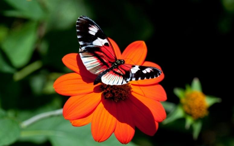 bahar ve kelebekler