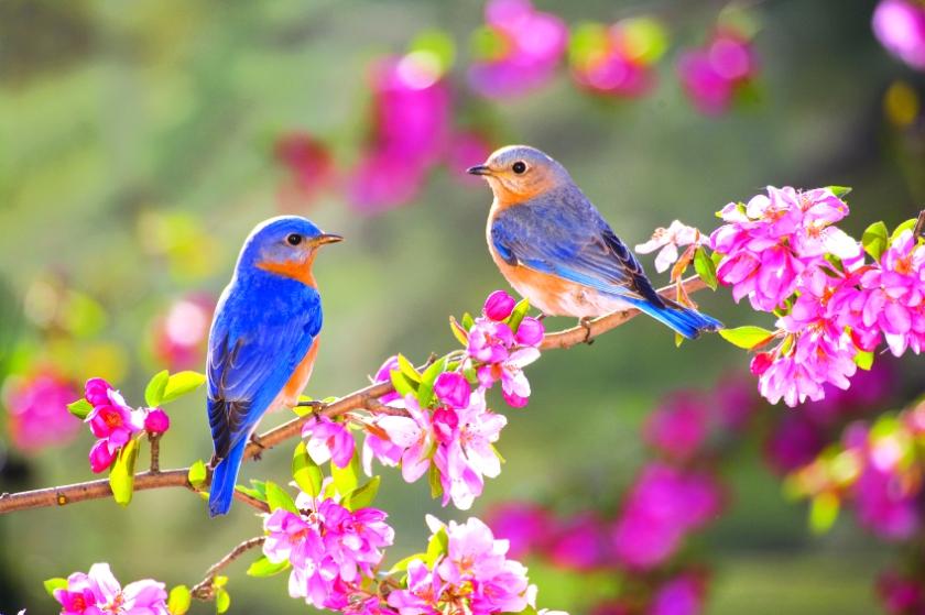 Bahar hakkında sözler