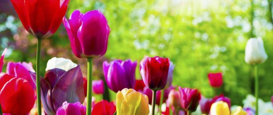 Çiçekler hakkında sözler