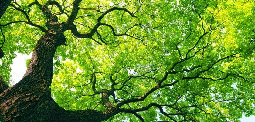 Ağaç ve orman ile ilgili anlamlı ve güze sözler