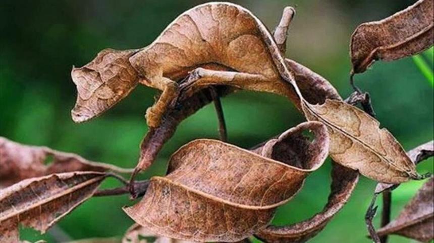 Adaptasyon ve uyum ile ilgili anlamlı ve güzel sözler