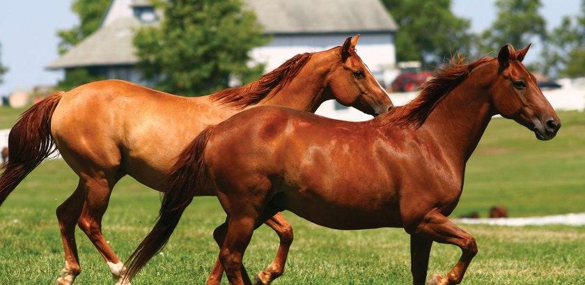 At ile ilgili anlamlı ve güzel sözler