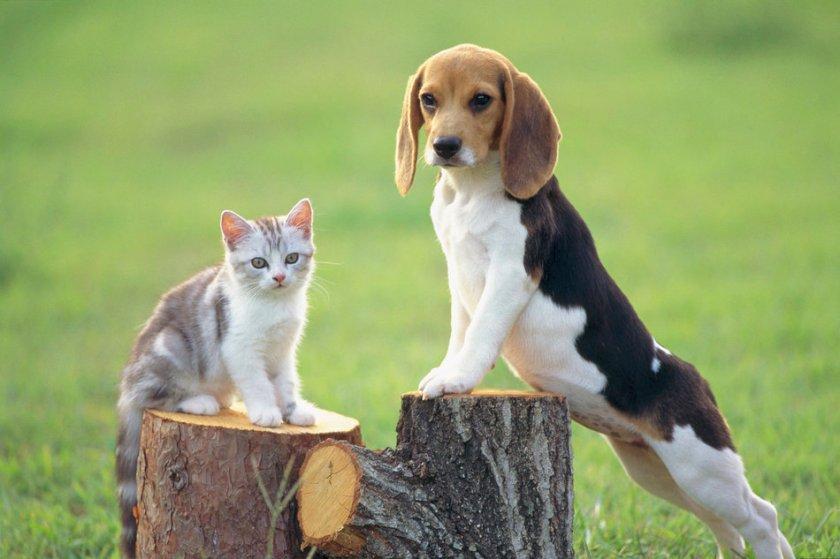 Köpekler ile ilgili anlamlı ve güzel sözler